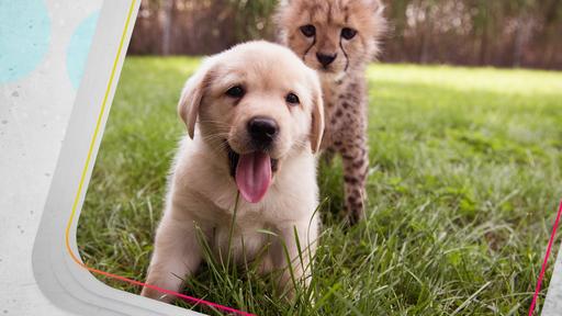 Ihastuttavat koiranpennut