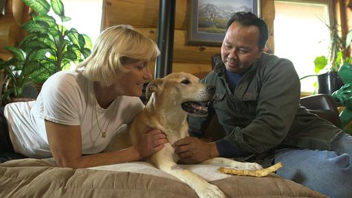Alaskan eläinlääkäri