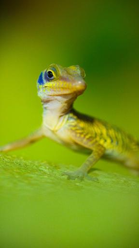 Avara luonto: Tuntematon Kuuba