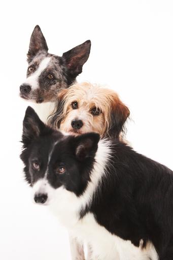 Prisma: Kiehtovat koirat