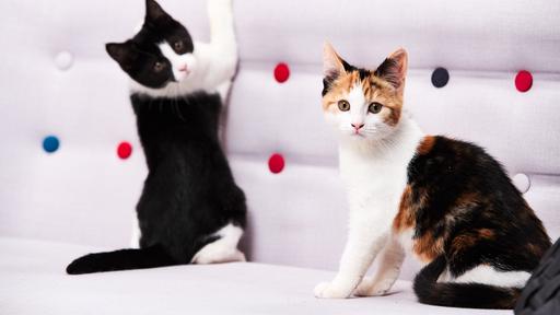 Prisma: Kiehtovat kissat
