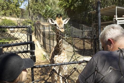 San Diegon eläintarha