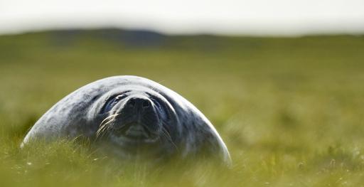 Avara luonto: Pohjois-Atlantin armoilla